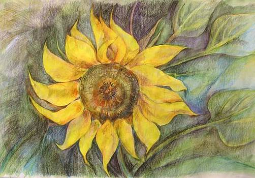 Anna  Duyunova - Sunflower