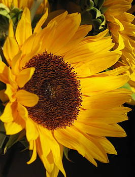 Sunflower--Dappled Light by Vikki Bouffard