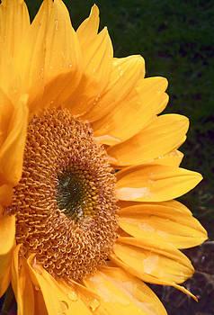 Jon Baldwin  Art - Sunflower
