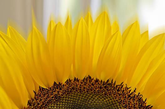 Sunflower by Mariola Szeliga