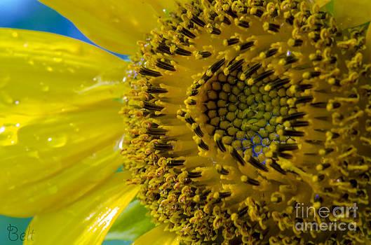Christine Belt - Sunflower No. 39