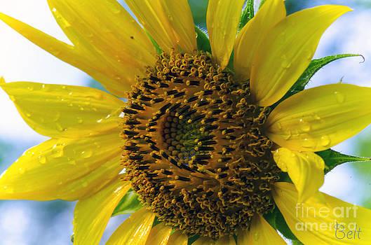 Christine Belt - Sunflower No. 40