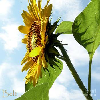 Christine Belt - Sunflower No.28