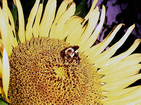 Jon Baldwin  Art - Sunflower With Bee