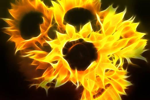 Cindy Boyd - Sunflowers on Fire