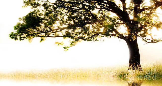 Simon Bratt Photography LRPS - Sunlit Swaying Tree