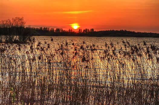 Sunny Delight by Kim Shatwell-Irishphotographer