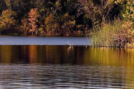 Sunrise City Lake by Cindy Rubin