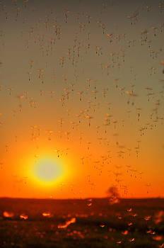 Emily Stauring - Sunset Float