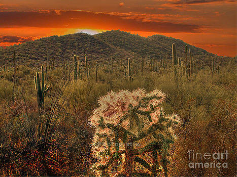 Sunset in the desert by Jim Wright
