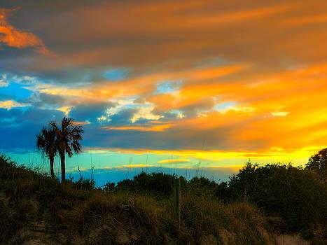 Sunset Palm Folly Beach  by Jenny Ellen Photography