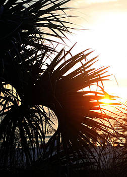 Sunset Palm by Monica Lahr