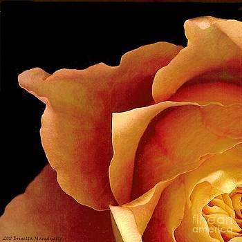 Sunset Rose 1 by Brigetta  Margarietta