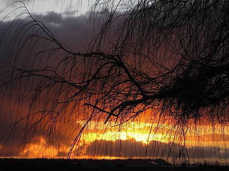 Sunset by Sandra  Rohmann