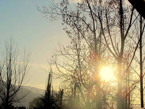 Sunset through Trees by Amy Bradley