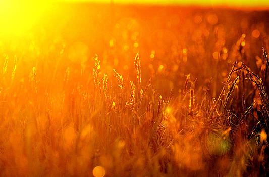 Emily Stauring - Sunset Wheaties