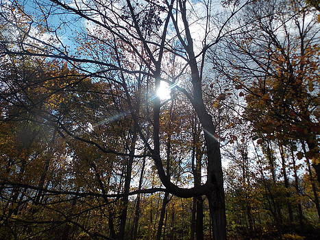 Sunshine Through The Trees In The Fall by Angelika MacDonald