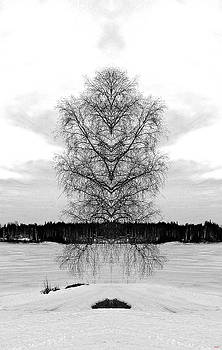 Suspended Tree by SM Shahrokni