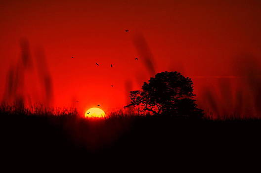 Emily Stauring - Swallowtail Sunset