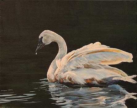 Swan Glow by Scott Thompson
