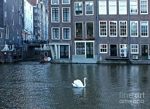 Gregory Dyer - Swan in Amsterdam
