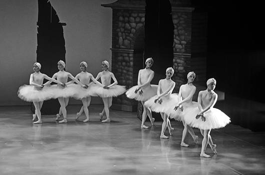 Swan Lake 6 by Cheryl Cencich