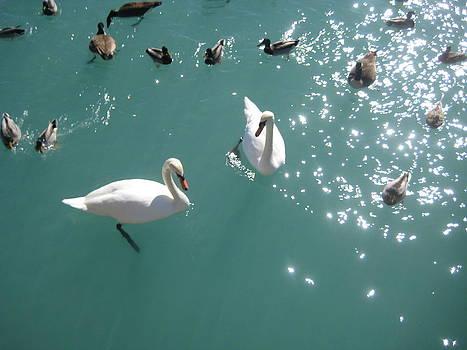 Swan Lake Sparkle by Renee Antos