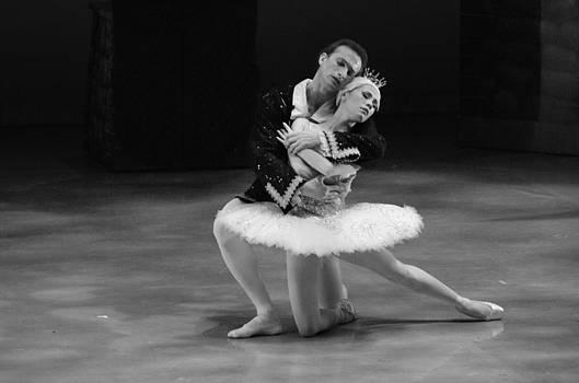 Swan Lake11 by Cheryl Cencich