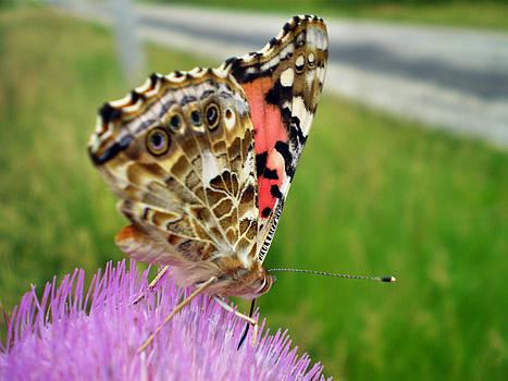 Sweet Nectar by Chris Shadwick