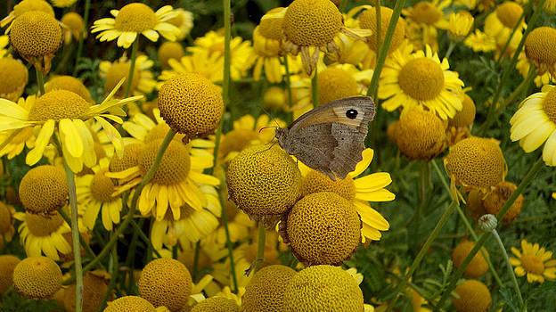 Sweet Yellow by Tinatini Popiashvili