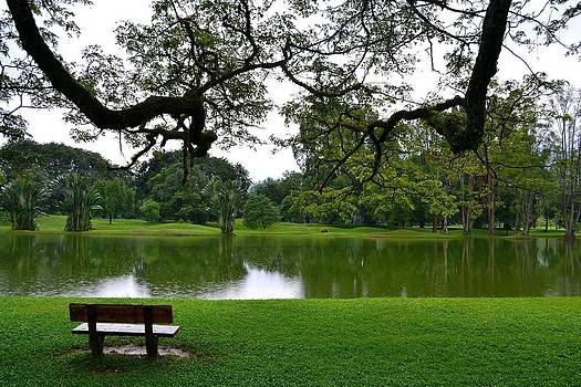 Taiping Lake View by Ku Azhar Ku Saud