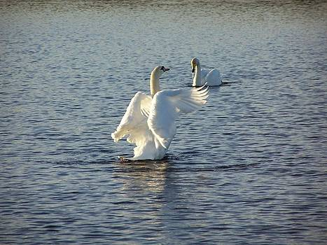 Tall Swan by George Leask