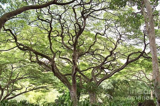 Tangled Hawaiian Tree by Deborah Cummins