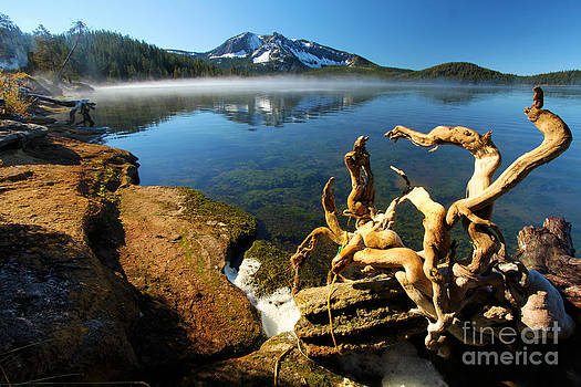 Adam Jewell - Tangled Landscape