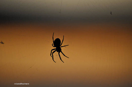 Tangled Web by Sarai Rachel