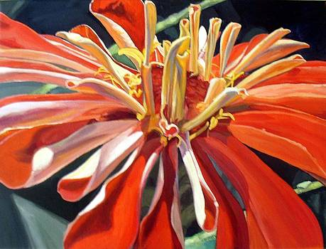 Tango-ing with a Zinnia by Stephanie Corder