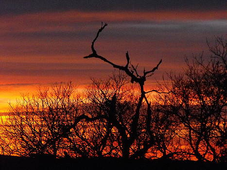 Texas Spanish Oak Tree  Sunset by Rebecca Cearley