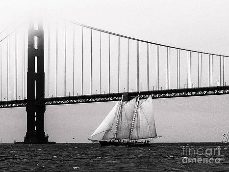 The America And The Golden Gate by Patty Descalzi