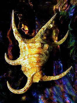 Frank Wilson - The Arthritic Spider Conch Seashell