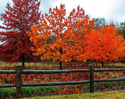 The best of fall. by Randall Templeton