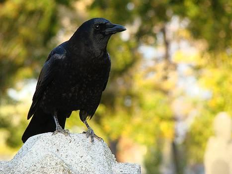 Gothicolors Donna Snyder - The Blackbird