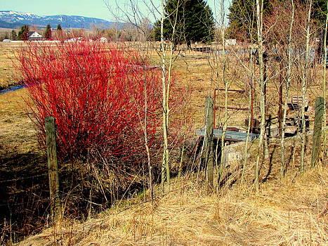 The Burning Bush by Amy Bradley