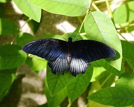 The butterfly bench by Salomi Prakash