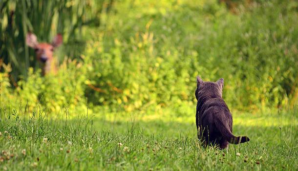 The Deer Hunter by Lori Tambakis