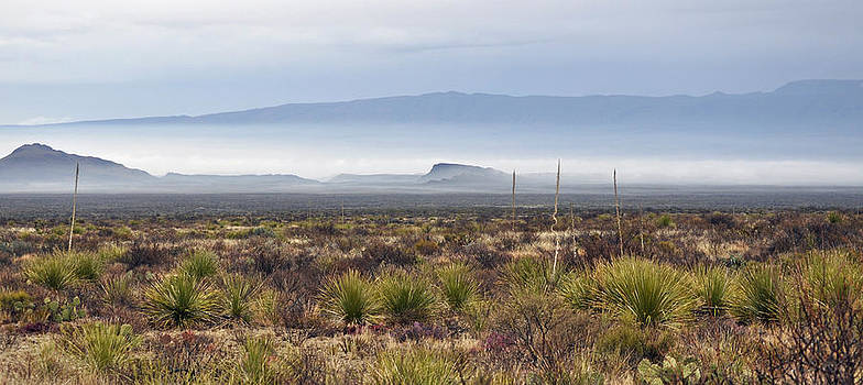 The Desert Mists And Fog by Timothy Johnson