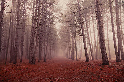 The Enchanted Forest by Dustin Abbott
