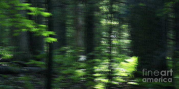 Linda Knorr Shafer - The Forest For The Trees