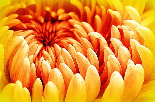 The Garden Club.... by Tanya Tanski