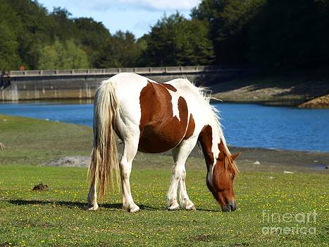 The Grazing Mare by Alfredo Rodriguez