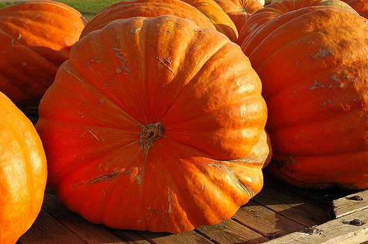 LeeAnn McLaneGoetz McLaneGoetzStudioLLCcom - The Great Pumpkin